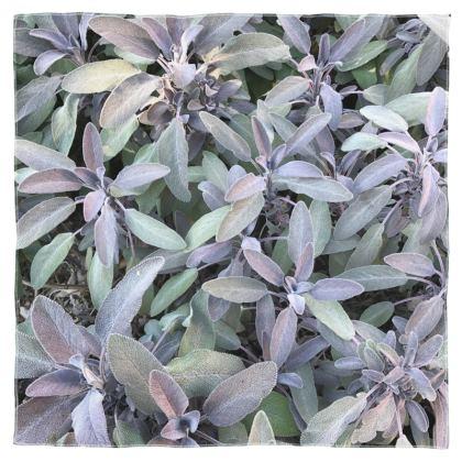 Scarf Wrap or Shawl - Purple Sage