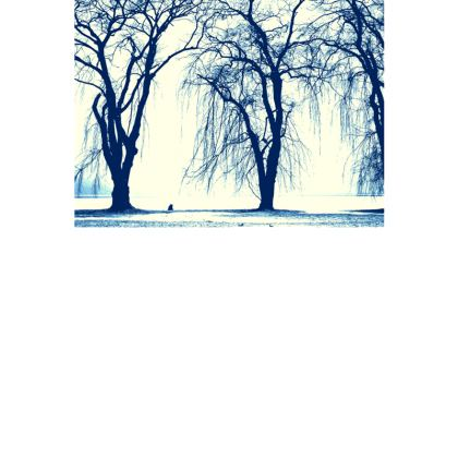 Blue Trees Postcard