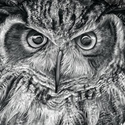 'Eagle-eyed Owl' Cushion