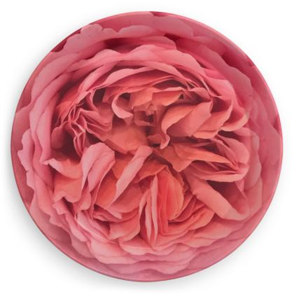 Party Plates - Peach Pink Rose