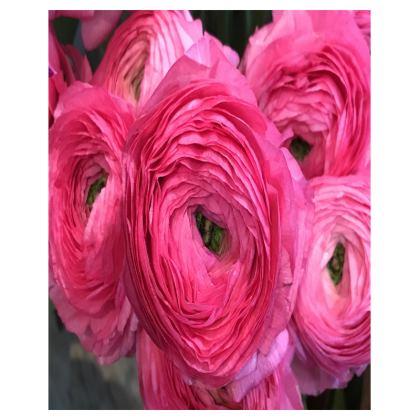 Trays - Italian Rich Pink Ranunculus