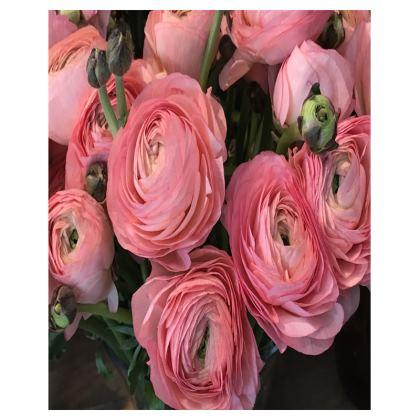 Trays - Italian Pink Ranunculus