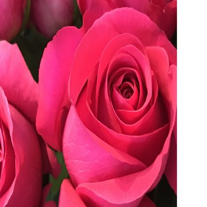 Trays - Glowing Rose