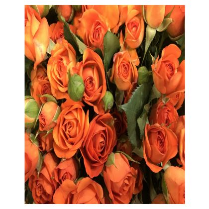Trays - Orange Spray Roses