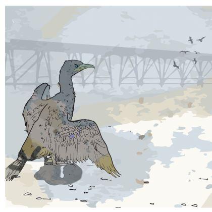 Cormorant 2 Cushions