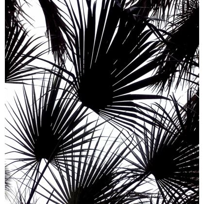 BLACK AND WHITE TROPICAL LEAVES - on Espadrilles