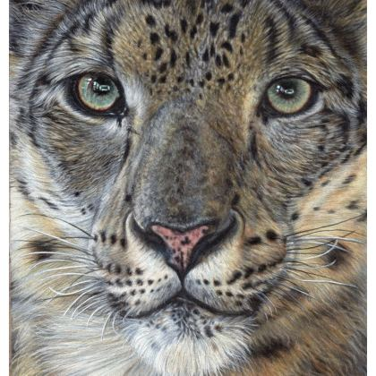 Big Cat Coasters - Snow Leopard