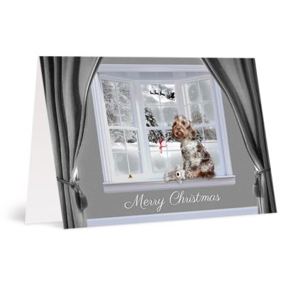Chocolate merle christmas card