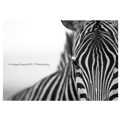 M.A. Photography Zebra  Zip Top Handbag