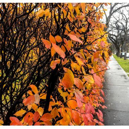 Grosvenor Cushion