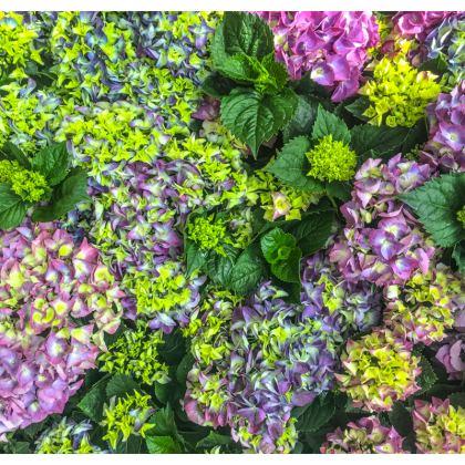 Oh Hi, Hydrangea Cushions