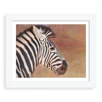 Vibrant zebra head