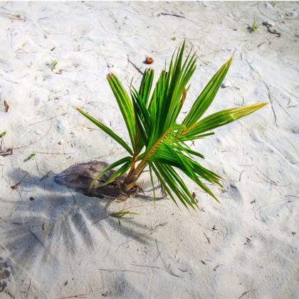 Kussens coconut bliss 50x50 cm