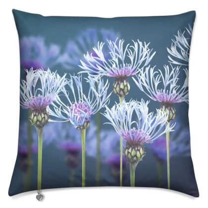 Centaurea Cushion