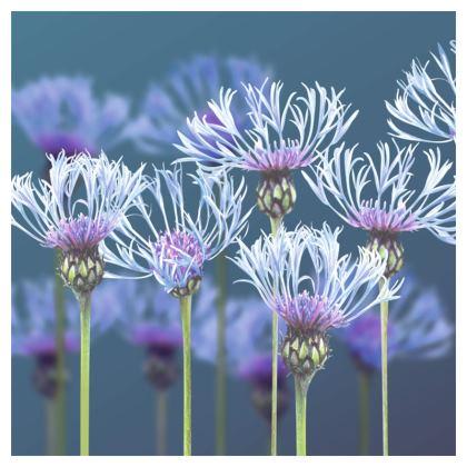Centaurea Coasters