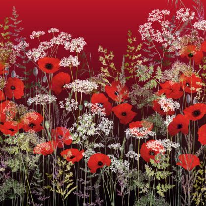 Poppy Field at Sunset Coasters