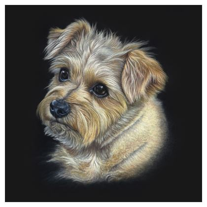 Coasters - Norfolk Terrier, Hattie