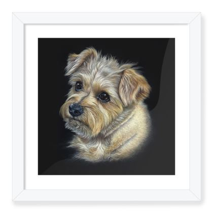 Framed Art Print - Norfolk Terrier, Hattie