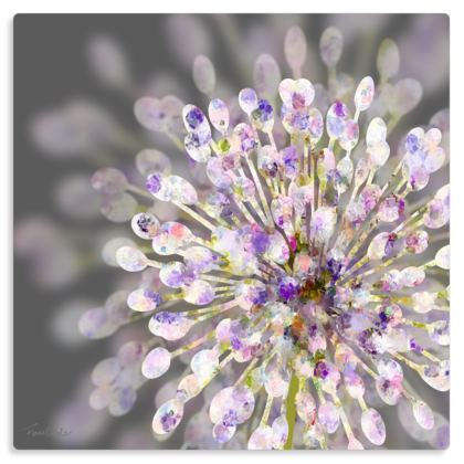 "Allium Metal Print. Size 12"" x 12"""