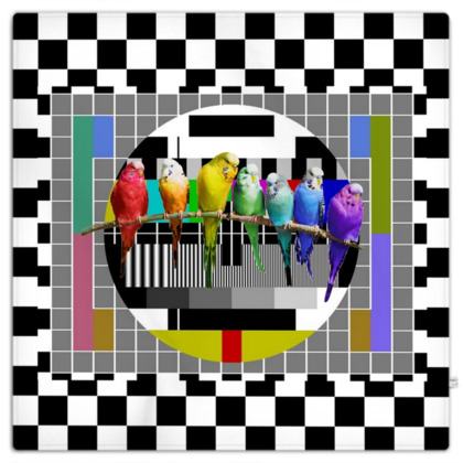 Test Card and Rainbow Budgies Picnic Blanket