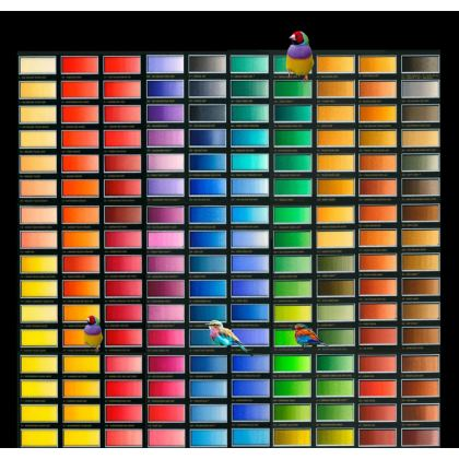 Colour Chart Suitcase