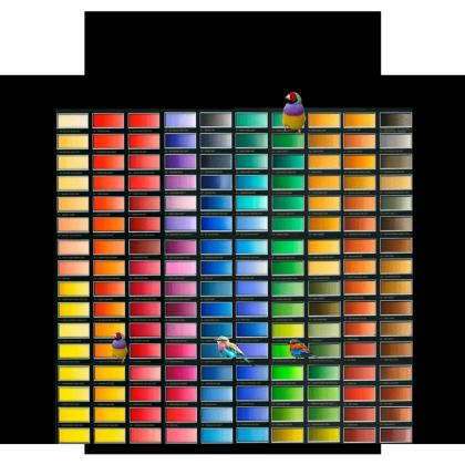 Colour Chart Luggage Tag