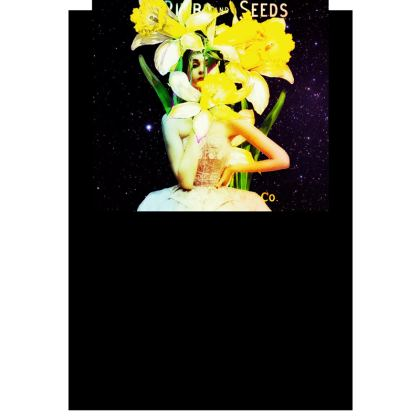 Daffodil Time Postcards
