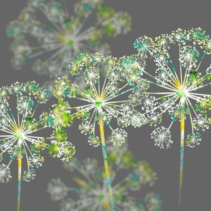 Apiaceae Cushion