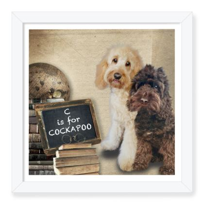 C is for COCKAPOO