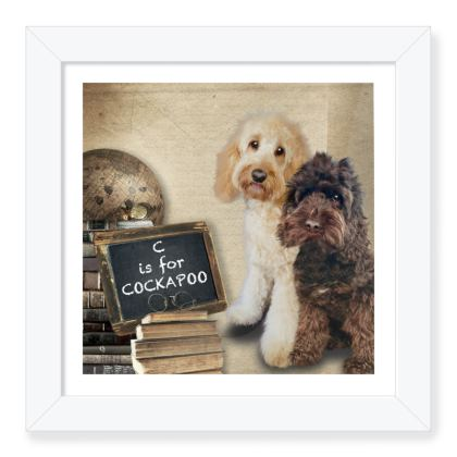 """C is for COCKAPOO white 8""""x8"""" framed print"""