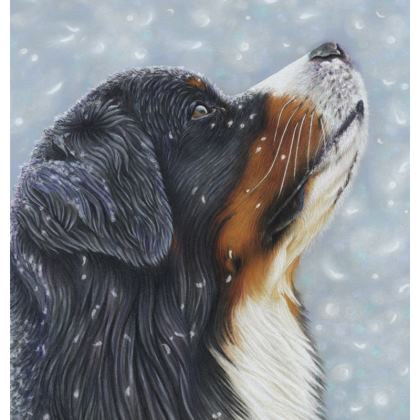 Bernese Mountain Dog Coasters - Blissful Blue