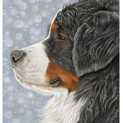 Bernese Mountain Dog Coasters - Let It Snow