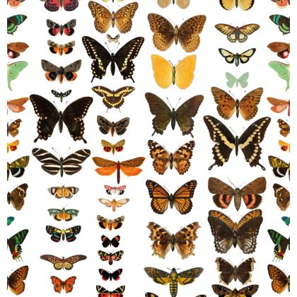 Butterfly and Moth Crossbody Bag With Chain