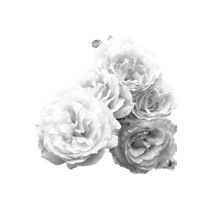 Kimono Jacket| Wedding Cap |throw over| Monochrome rose