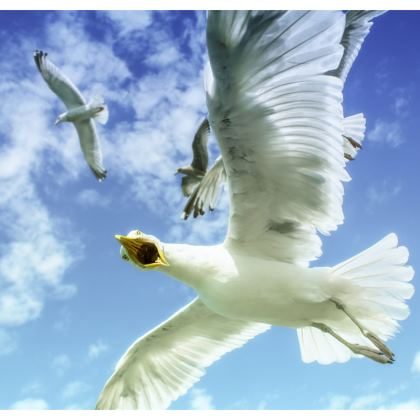 Brighton Seagull Double Deckchair