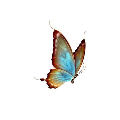 butterflies and birds face masks pack of 4