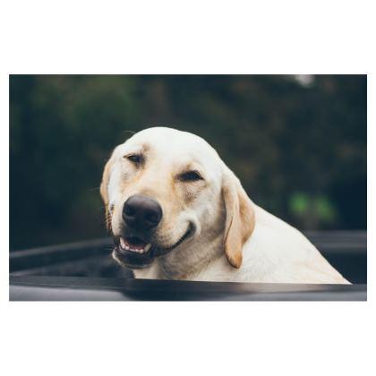 Doggy Face Masks