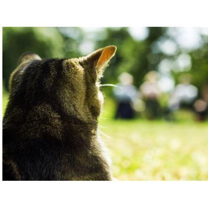 Tabby Cat Handbag
