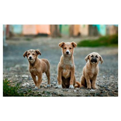 Dog Variety Pack