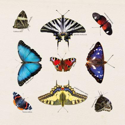 Cushion - Mirrored Butterflies
