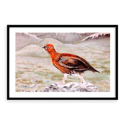 Grouse in Winter - Framed Print