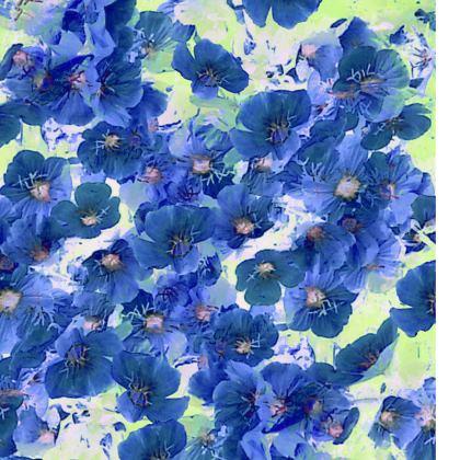 Ladies Tunic Blue Prim Roses