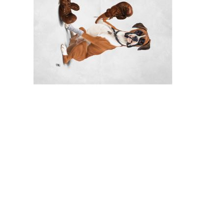 The Boxer ~ Wordless Animal Behaviour Art Postcard