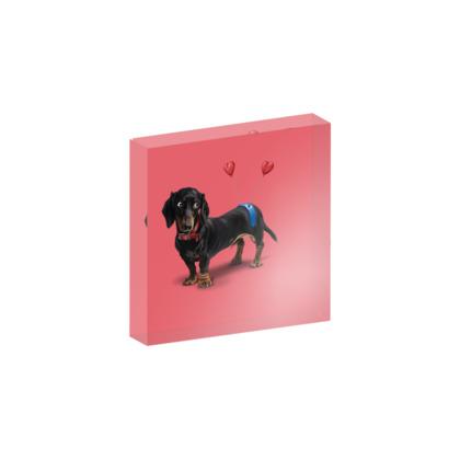Butt ~ Colour Animal Behaviour Acrylic Photo Blocks