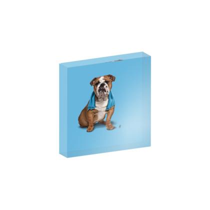 Bull ~ Colour Animal Behaviour Acrylic Photo Blocks