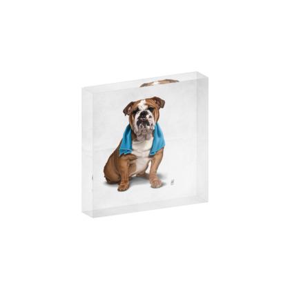 Bull ~ Wordless Animal Behaviour Acrylic Photo Blocks