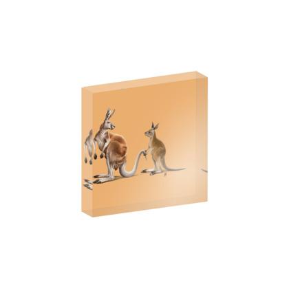 Being Tailed ~ Colour Animal Behaviour Acrylic Photo Blocks