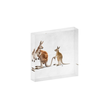 Being Tailed ~ Wordless Animal Behaviour Acrylic Photo Blocks