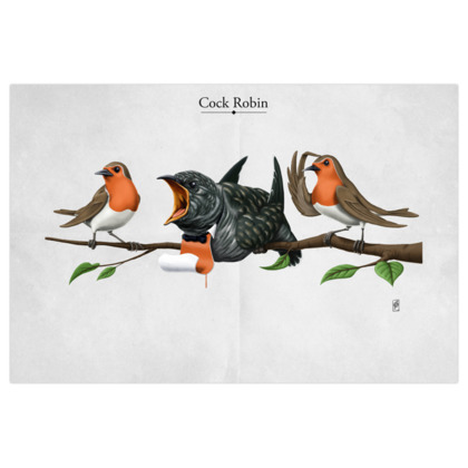 Cock Robin ~ Title Animal Behaviour Art Print