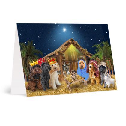 A6 Greetings card Packs